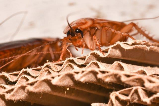 уничтожение тараканов в Сочи