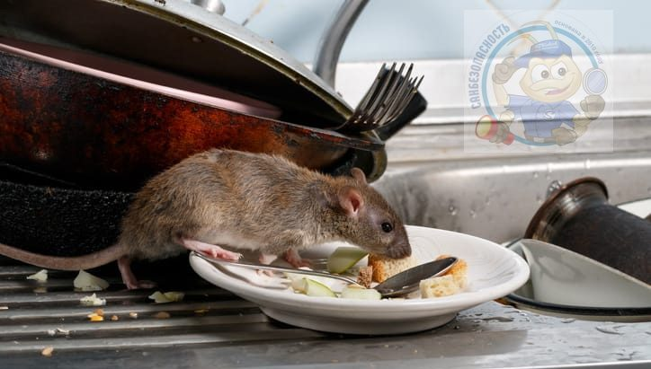 Что привлекает крыс в Ваш дом